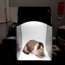 Фотосъемка домашних животных просто и быстро в фотобоксе Simp-Q L