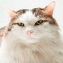 Фотосъемка домашних животных просто и быстро